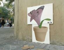 PlantaCara 1. (Flor de otoño) Barcelona