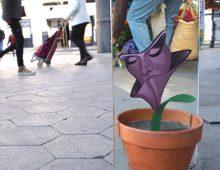 Planta cara