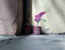 Planta cara. Barcelona