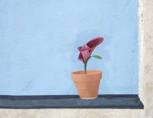 Lilium labialis, planta cara